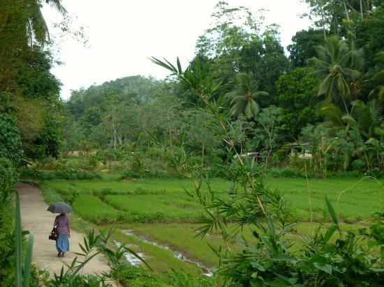 เอปาวิลลาลูเกเทีย: Blick in die Reisfelder