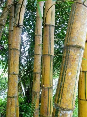 bambus im garten, bambus im garten - picture of apa villa illuketia, galle - tripadvisor, Design ideen