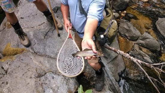 Yosemite Sierra Fly Fishing : today's record
