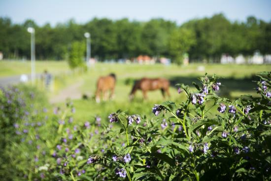 Hotel Odense: Natur ved hotellet