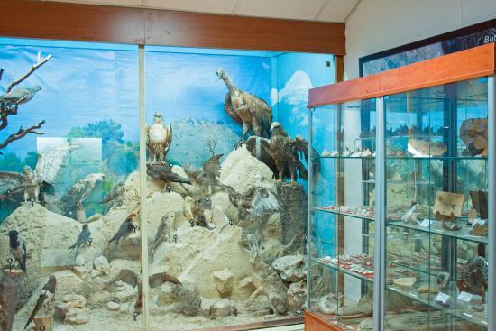 Municipal Museum of Natural History