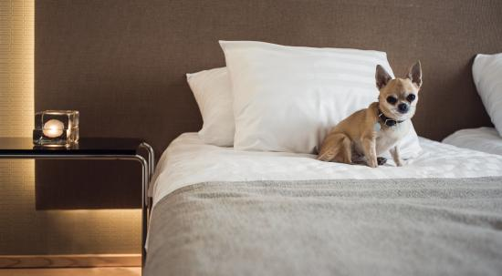 Hotel Helka : Pet friendly