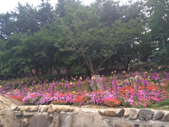 Wangxi Park: Цветы