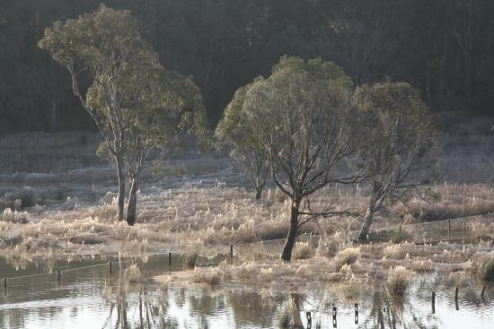 Frog Gully Cottages: The wetland in winter