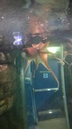 Macduff Marine Aquarium Photo