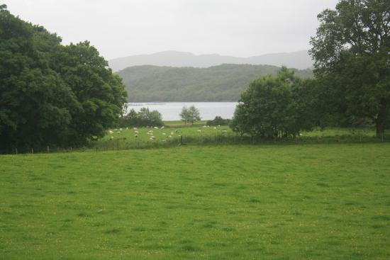 Views of green files and Loch Etive await - Picture of