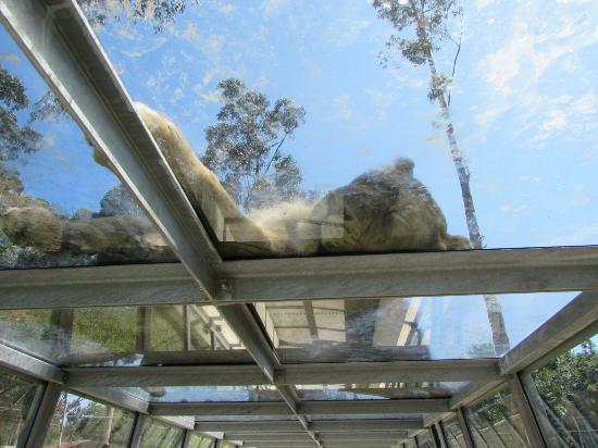 Zoo Santo Inácio : algumas fotos que tirei @callmecatarina