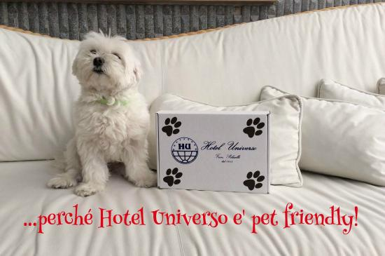 Hotel Universo: pet friendly