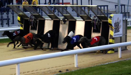 Limerick Greyhound Stadium: And they are off...