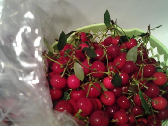 Varick Winery & Vineyard: sour cherries