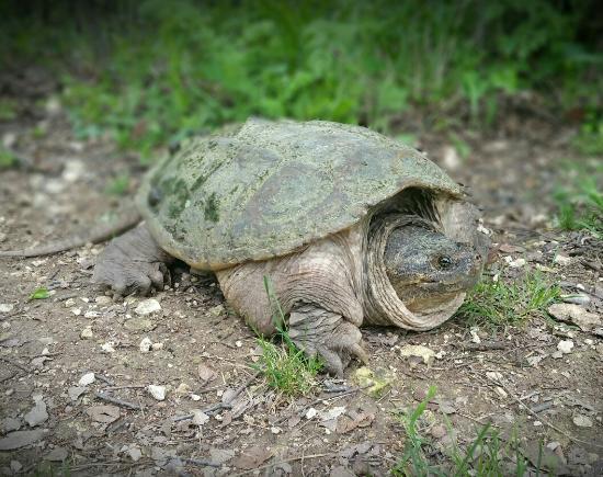 Πλάνο, Τέξας: Arbor Hills Nature Preserve
