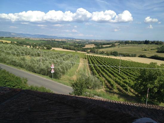 Fattoria Santa Vittoria: Vineyards and surroundings