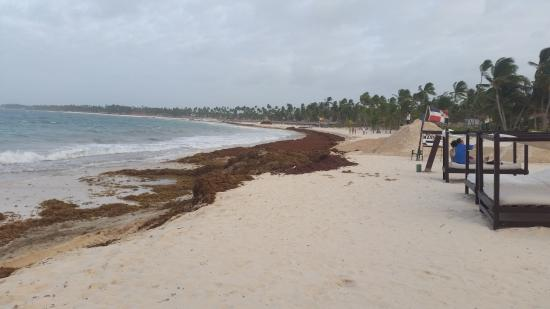 Seaweed on beach - Picture of Punta Cana Princess All Suites