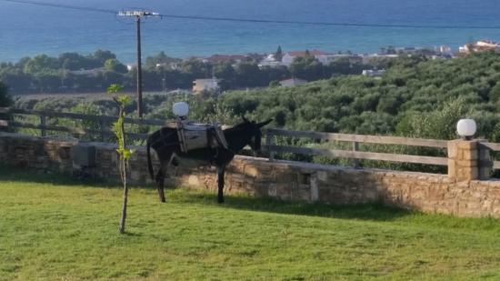 Carme Villas : View
