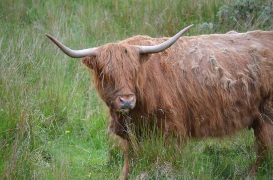 Swordale House : A coos