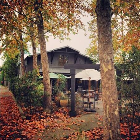 Honig Vineyard & Winery: Fall