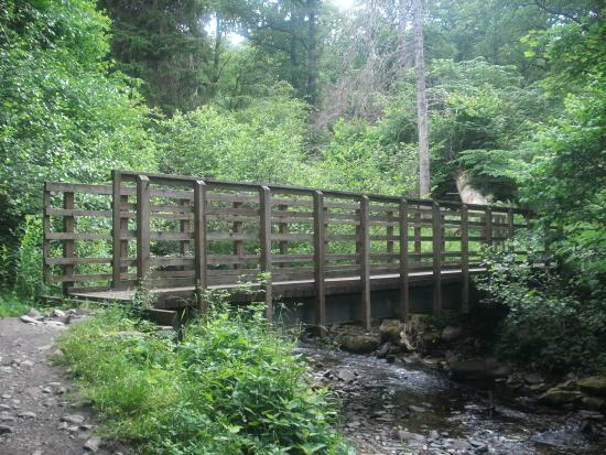Black Spout Wood: Bridge over the burn