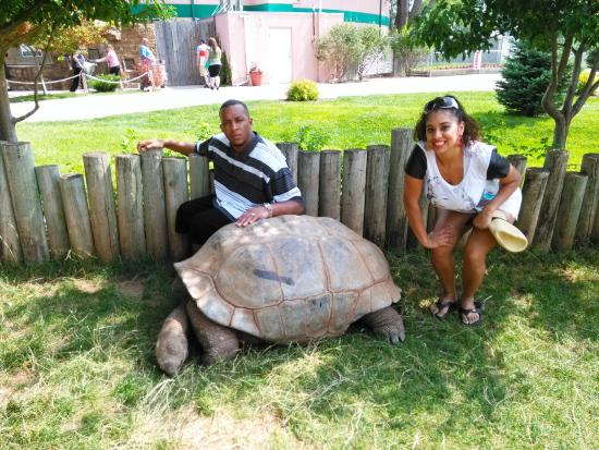 My wife and I near the giant tortoise. - Picture of Reptile Gardens ...