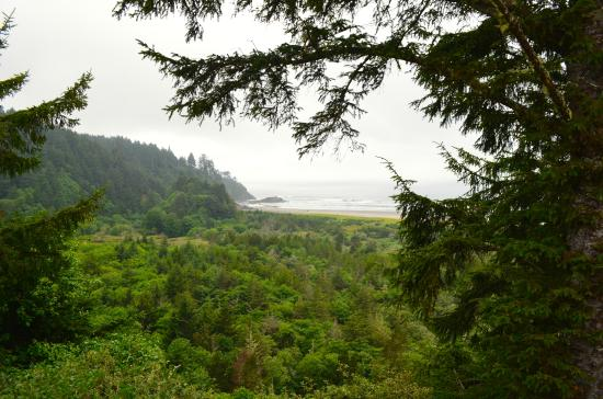 Ilwaco, WA: A look through the foliage to one of many beaches on the Columbia darainage