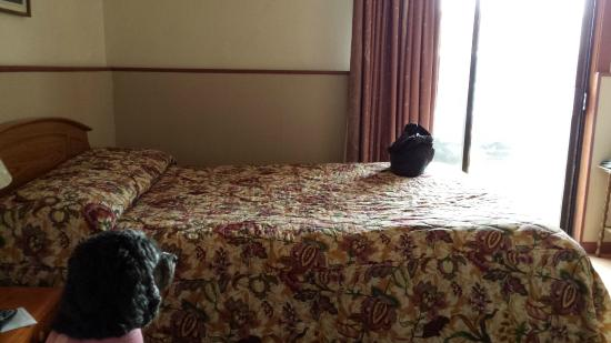 Lighthouse Inn Florence: Bedroom with Queen bed.  They provide a pet package (towels and blanket)