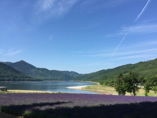 Lake Kanayama Forest Park : 2015.7.11 ラベンダーが見頃です