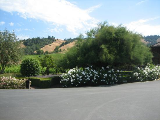 Navarro Vineyards: view of property