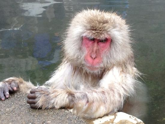 Yamanouchi-machi, Japan: Jigokudani Snow Monkey Park