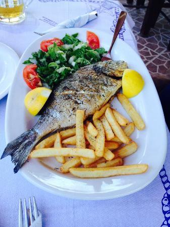 To Kati Allo: Fish Special