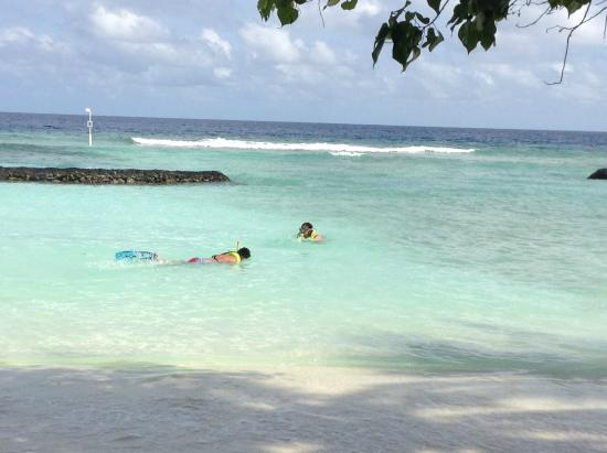 Остров Курамати: Snorkelling in the beach area just a few meters from our front door