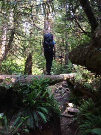 BCA Tours: Amazing forest trail.  Good balance is a requirement here! :))