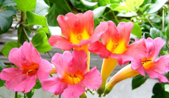 Two bedroom suite - patio flowers