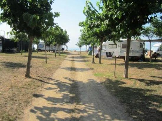Camping Playa y Fiesta: аллея
