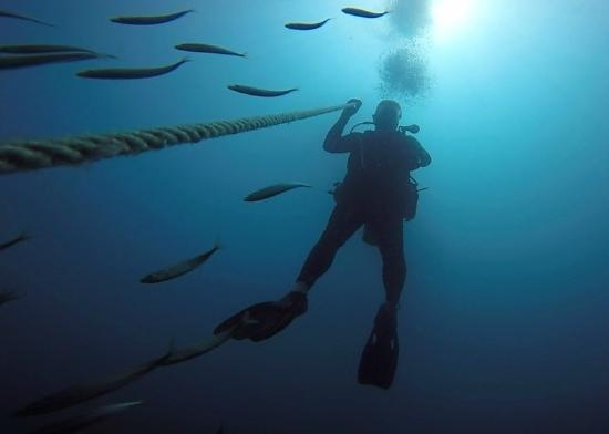 Diver's Den: Heading to the surface.