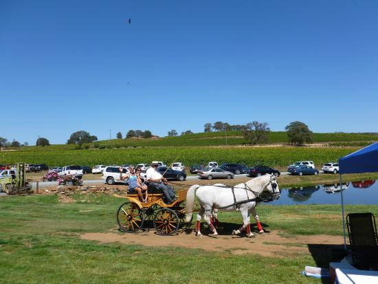 Grass Valley, CA: Take a tour in a horse drawn carriage