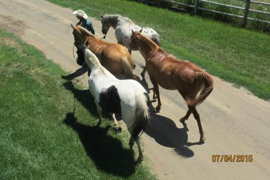 เคาน์ซิล, ไอดาโฮ: Moving the horses to a grazing area in the afternoon
