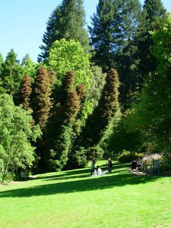 UC Botanical Garden at Berkeley - Picture of UC Botanical Garden at ...