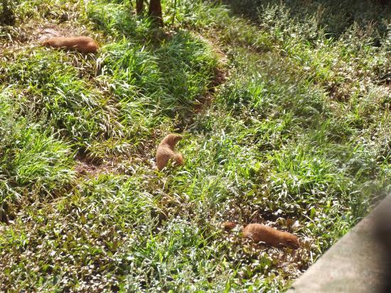Sao Jose Do Rio Preto, SP: Zoológico municipal