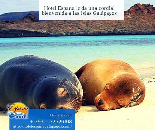 Hotel España: recreación