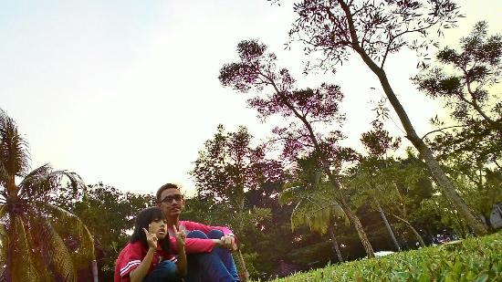 Taman Tabebuia