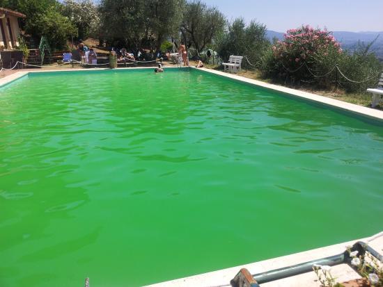 piscina verde ma non verde acqua picture of villa