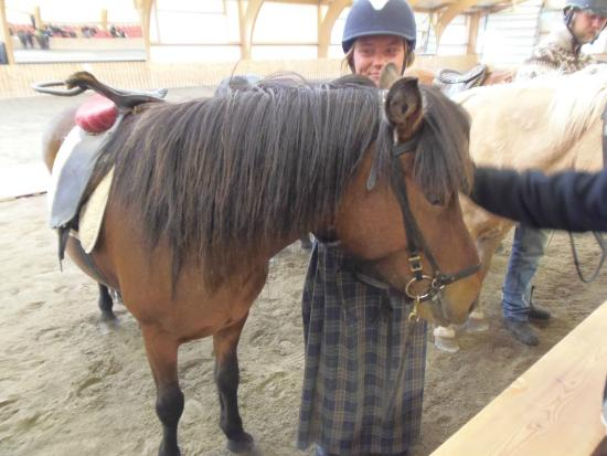 Eld Hestar Horseback Tours : One of the horses being presented to us to pet and stroke