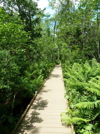 Orono Bog Boardwalk: bog walk wet lower elevation