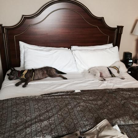 Omni Berkshire Bed Bugs