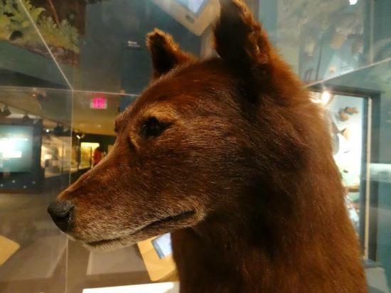Natural History Museum Cleveland Ohio Membership