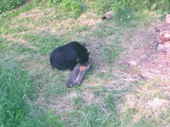 Vince Shute Wildlife Sanctuary: Sanctuary