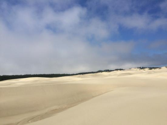 Florence, OR: view of the dunes