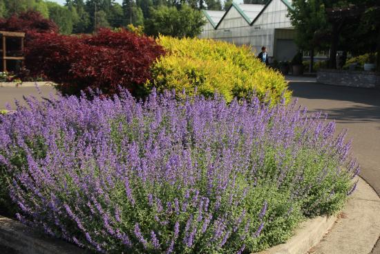 als garden center flores na entrada - Als Garden Center