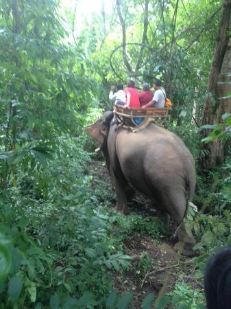 Ride On An Elephant : real jungle