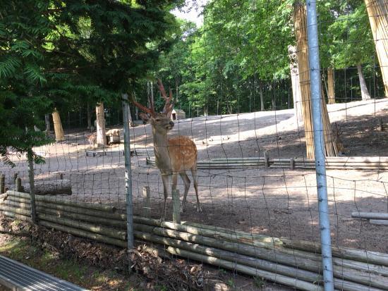Abira Town Deers Park: photo0.jpg