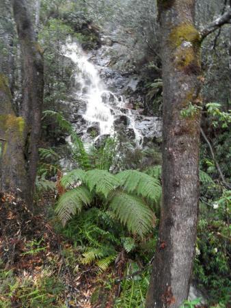 Ταζμανία, Αυστραλία: BEAUTIFUL :)